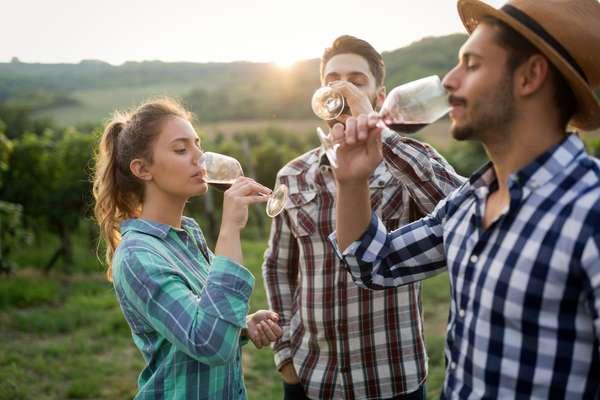 ragazzi in degustazione di vino